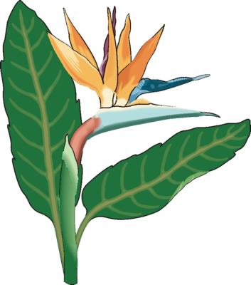 flower clip art images. Flower Clip Art 15