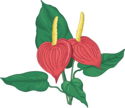 Flower Clip Art 6