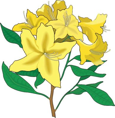 flower clip art. Flower Clip Art 8